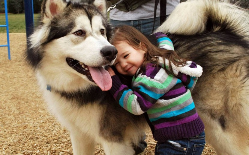 Аляскинский маламут и ребенок