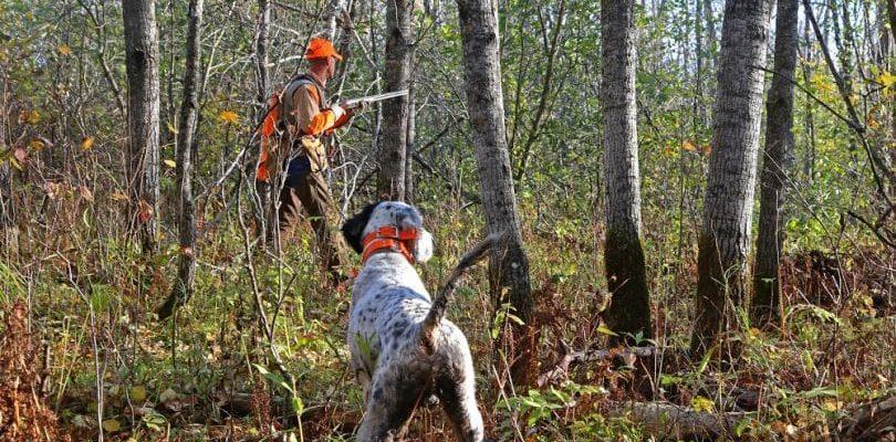 Охота на птиц с собакой