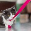 Кошка кусает розовую ленточку