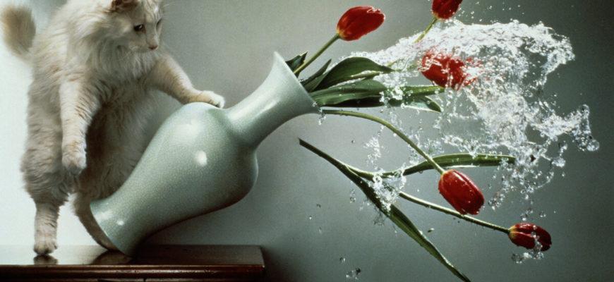 Кошка роняет вазу