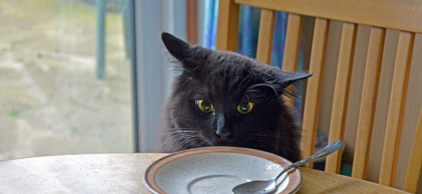 Кошка ест из тарелки
