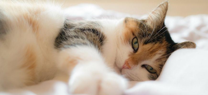 Кошка не спит ночью