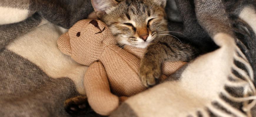 Кошка спит в кровати