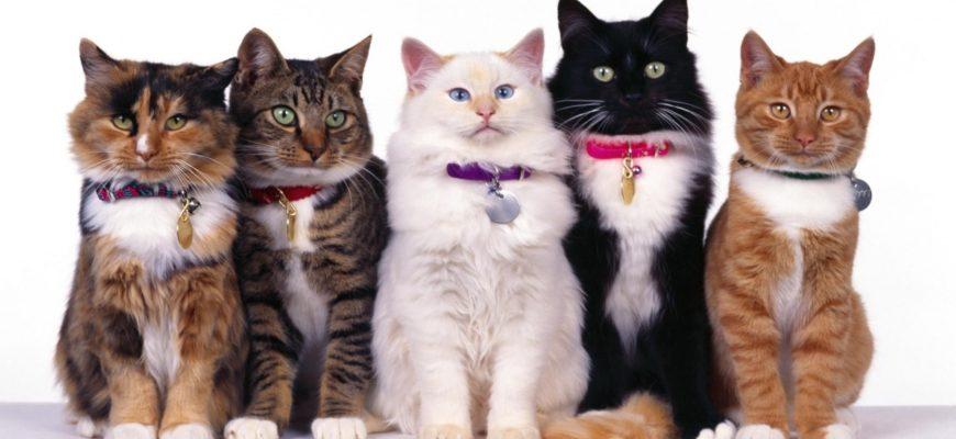 Кошки из приюта