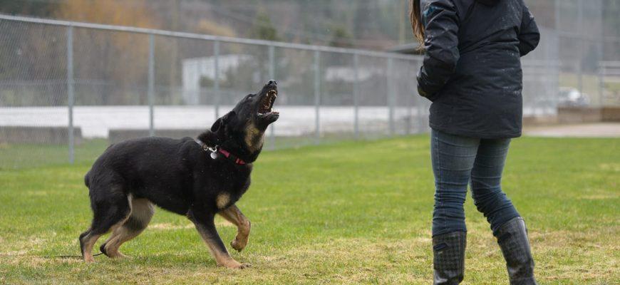 Лающая собака