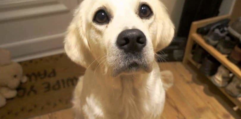 Собака печально смотрит