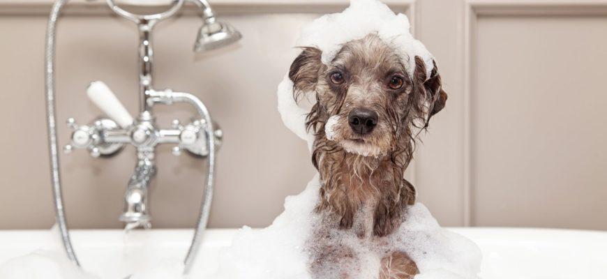 Собака моется в ванной