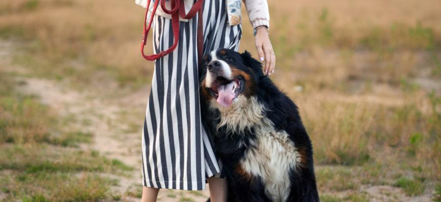 Собака опирается на хозяина