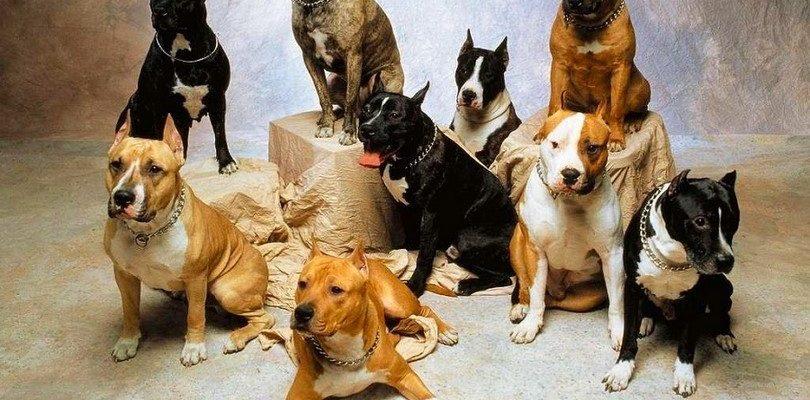 Сомнительные породы собак