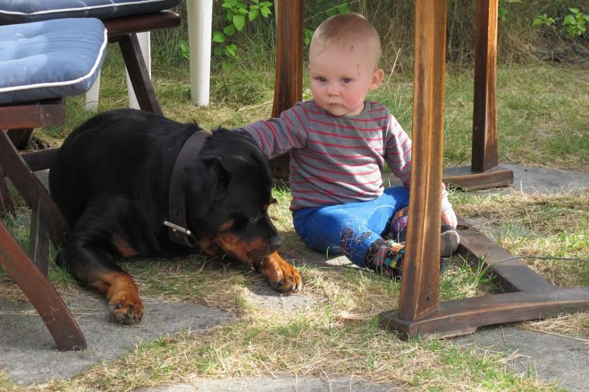 Ротвейлер и ребенок