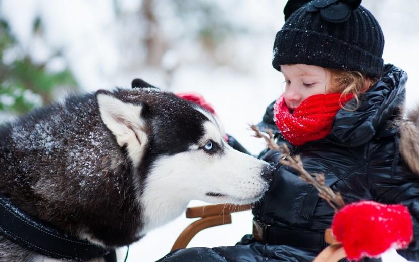Сибирский хаски и ребенок
