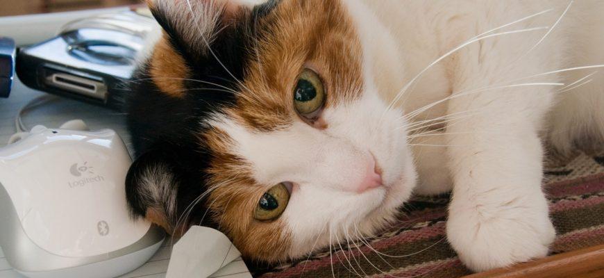 Мурлыкающая кошка