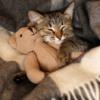 Кошка спит на кровати