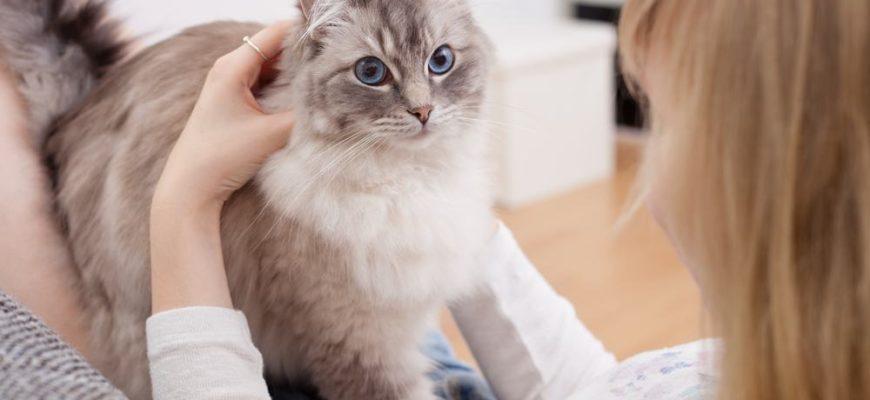 Кошка ходит по своему хозяину