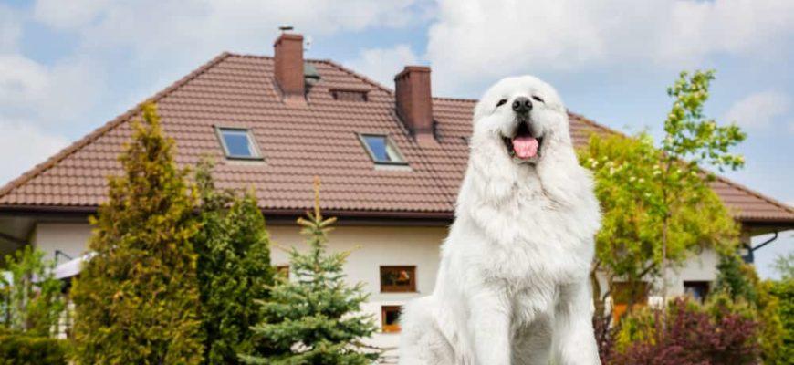 Собака охраняет частный дом