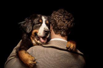 Собака любящая своего хозяина