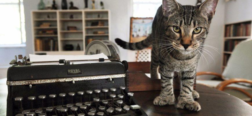 Полидактильная кошка