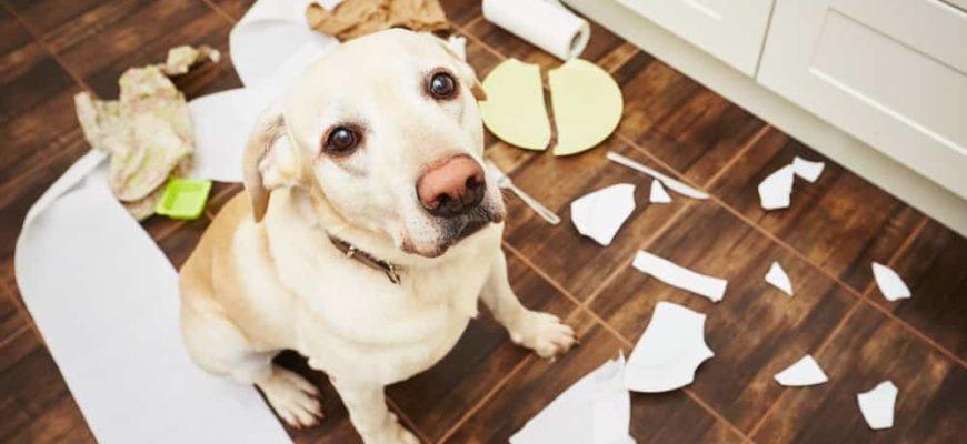 Вредные собачьи привычки