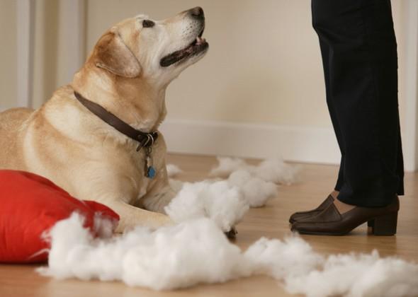 Владелец отчитывает виноватую собаку