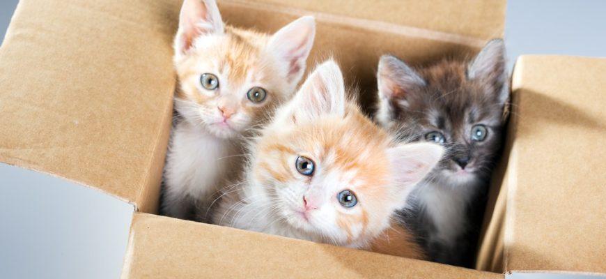 Котята в маленькой коробке
