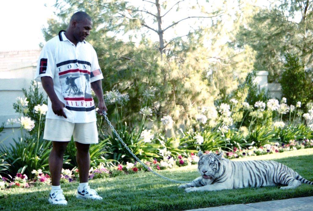 Майк Тайсон с молодым тигренком