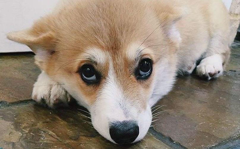 Собака с виноватым выражением