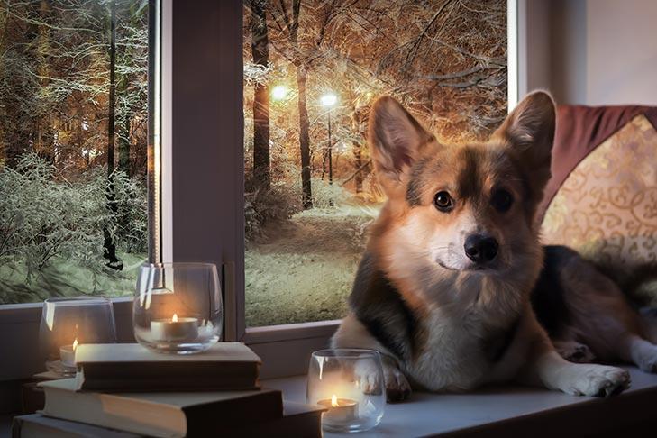 Корги со свечами