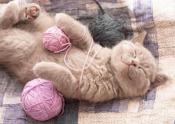 Кот с клубком ниток