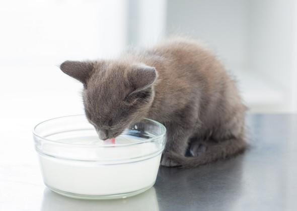 Котёнок и молоко