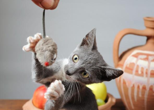 Кошка играет с игрушками