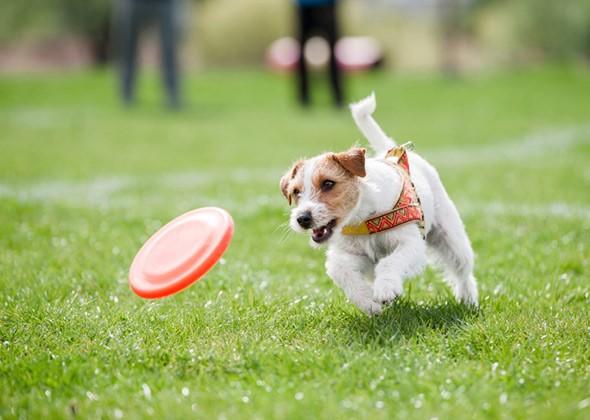 Тренировка собаки