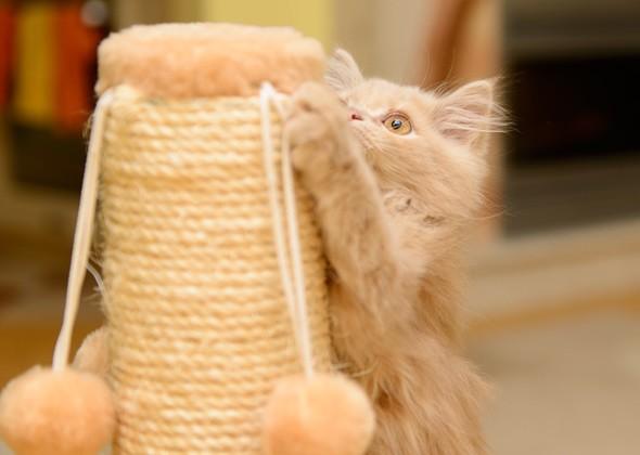 Кошка царапает когтеточку