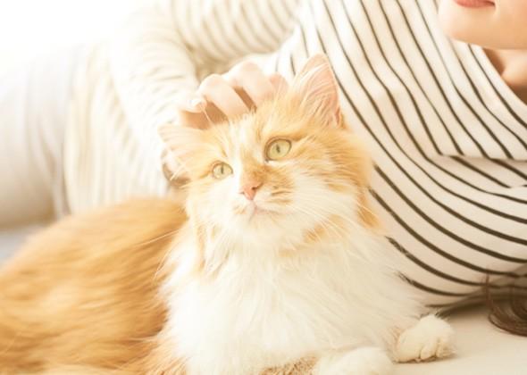 Кошка общается с хозяином