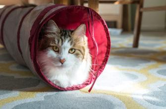 Кошка в кошачьем туннеле